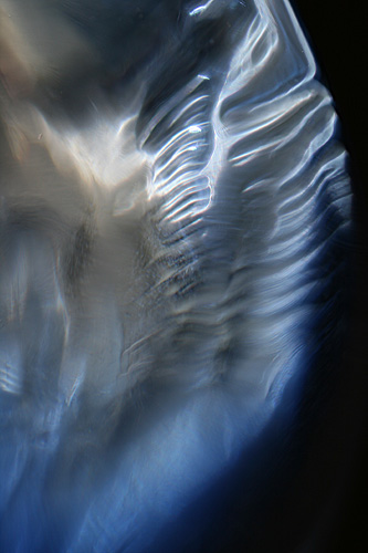 Original 'in camera' image for 'Angel Wing' - photography by Jane Trotter