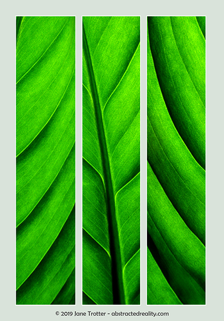 'Leaf Drapery' - Abstract Art by Jane Trotter